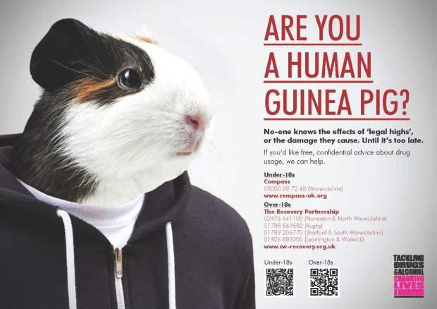 Legal Highs Guinea Pig